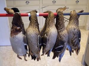 10 brace of duck